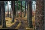 Pine Forest Trail, Photography, Fine Art,Photorealism, Landscape,Nature, Photography: Premium Print, By Mike DeCesare