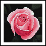 PINK GALAXY, Paintings, Realism, Botanical, Painting, By William Clark