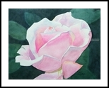 Pink Rose, Paintings, Impressionism, Floral, Watercolor, By Christina Giza