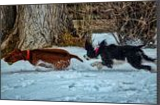 Playtime In The Winter Snow, Photography, Fine Art, Animals, Photography: Stretched Canvas Print, By Jim Stewart