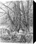 PLEIN AIR 06/08-03-2017 (TREES), Drawings / Sketch, Fine Art,Impressionism,Realism,Romanticism, Landscape, Pencil, By Dima Braga