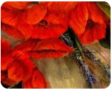 Poppy Passion, Paintings, Fine Art,Impressionism,Primitive,Romanticism, Floral,Still Life, Canvas,Oil, By Loretta D Luglio