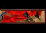 Poppy Passion, Paintings, Fine Art,Impressionism,Primitive,Romanticism, Floral,Still Life, Canvas,Oil, By Loretta D Luglio
