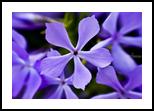 Purple haze, Photography, Fine Art, Still Life, Photography: Photographic Print, By Scott Cone