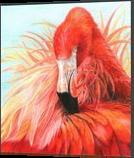 Red Flamingo, Drawings / Sketch,Paintings, Photorealism,Realism, Nature,Seascape,Wildlife, Painting,Pencil, By Carla Kurt