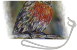Red Robin, Paintings, Fine Art, Animals,Wildlife, Acrylic, By Susan Willemse