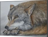 Red Wolf endangered species, Paintings, Fine Art,Realism, Animals,Environmental art,Portrait, Painting,Watercolor, By Kelly A Mills