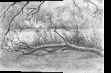 Royal Estate 'De Horsten' - 06-07-14, Drawings / Sketch, Abstract,Fine Art,Impressionism,Realism, Composition,Figurative,Inspirational,Landscape,Nature, Pencil, By Corne Akkers