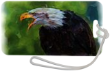 Screaming eagle, Digital Art / Computer Art, Realism, Animals, Digital, By Joshua Bindseil