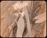 Sharon Park 7, Digital Art / Computer Art, Fine Art, Landscape, Digital, By BENARY  IMAGE
