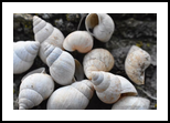 Shells, Photography, Abstract, Decorative, Photography: Photographic Print, By Scott Cone