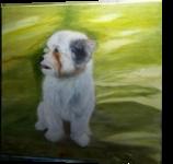 Shih tzu Dog Benji, Paintings, Fine Art,Realism, Portrait, Canvas,Oil, By Mike Chaple