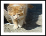 small cat, Photography, Photorealism,Realism, Animals, Photography: Photographic Print, By yevgeniya petrenko