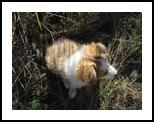 small dog, Photography, Photorealism, Animals,Nature, Photography: Photographic Print, By yevgeniya petrenko