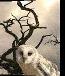 Snow Owl, Digital Art / Computer Art, Realism, Animals, Digital, By William Clark