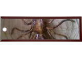 Spider, Fiber Art, Fine Art, Analytical art, Fiber, By musonda mandona
