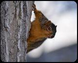 Squirrel, Photography, Fine Art, Wildlife, Photography: Premium Print, By Jim Stewart