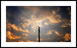Stand Alone, Photography, Fine Art,Photorealism, Animals,Daily Life,Environmental art,Land Art,Landscape,Nature,Still Life, Photography: Metal Print,Photography: Photographic Print,Photography: Premium Print,Photography: Stretched Canvas Print, By Nathan Little