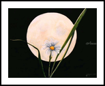 Summer Moon, Paintings, Realism, Botanical, Watercolor, By William Clark