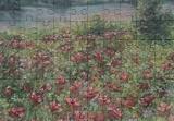 Summer romance, original oil painting 70x50cm, Paintings, Fine Art,Impressionism,Realism, Floral,Land Art,Landscape,Moving Images,Nature, Canvas,Oil, By Emilia Milcheva