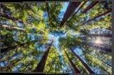 Sun Burst, Photography, Fine Art,Photorealism, Landscape,Nature, Photography: Premium Print, By Mike DeCesare