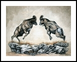 The Battle of Rams, Drawings / Sketch,Illustration,Paintings, Fine Art,Realism, Animals,Nature,Wildlife, Acrylic,Ink, By Rebecca Suzanne Magar