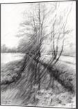 The Hague Forest - 23-04-14, Drawings / Sketch, Abstract,Fine Art,Impressionism,Realism, Composition,Figurative,Inspirational,Landscape,Nature, Pencil, By Corne Akkers