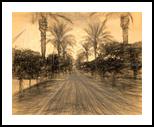The Raanana Park 2, Digital Art / Computer Art, Fine Art, Landscape, Digital, By BENARY  IMAGE