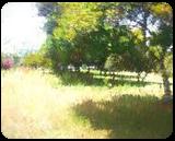 The Raanana Park 3, Digital Art / Computer Art, Fine Art, Landscape, Digital, By BENARY  IMAGE