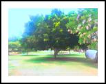 The Raanana Park 5, Digital Art / Computer Art, Fine Art, Landscape, Digital, By BENARY  IMAGE