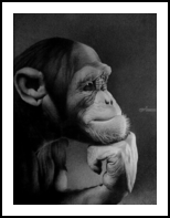 THE THINKER, Drawings / Sketch, Photorealism, Realism, Animals, Portrait, Wildlife, Pencil, By Miro Gradinscak