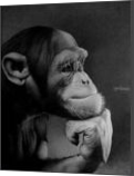 THE THINKER, Drawings / Sketch, Photorealism,Realism, Animals,Portrait,Wildlife, Pencil, By Miro Gradinscak