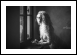 Tu m'as promis, Photography, Fine Art, Nudes,People, Digital, By Traven Milovich