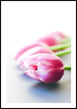 Tulips, Photography, Photorealism, Botanical,Floral,Still Life, Photography: Premium Print, By Mike DeCesare