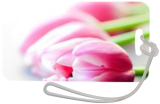 Tulips, Photography, Fine Art,Photorealism, Botanical,Floral, Photography: Premium Print, By Mike DeCesare