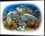 Turtle, Digital Art / Computer Art, Impressionism, Animals, Photography: Premium Print, By Glenn Lathi