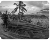 Valley of Paradise, Photography, Printmaking, Fine Art, Photorealism, Composition, Conceptual, Decorative, Documentary, Environmental art, Inspirational, Multicultural / Ethnic, Nature, Performance Art, Tropical, Photography: Metal Print, Photography: Photographic Print, Photography: Premium Print, Photography: Stretched Canvas Print, By Ira Silence