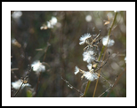 Wildflowers, Photography, Realism, Land Art, Photography: Photographic Print, By yevgeniya petrenko