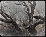 Winter Tree 1d, Digital Art / Computer Art, Fine Art, Landscape, Photography: Stretched Canvas Print, By Jim Stewart