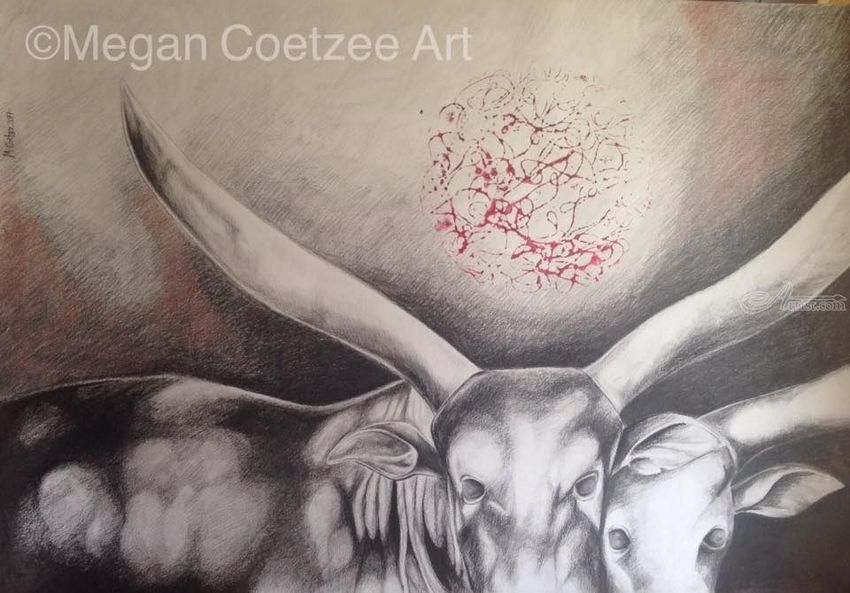 Ankole-watusi cattle, Drawings / Sketch, Abstract, Animals, Charcoal, By Megan Coetzee