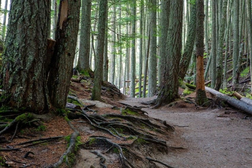 Avalanche Lake Trail, Photography, Realism, Landscape, Digital, By Mike DeCesare