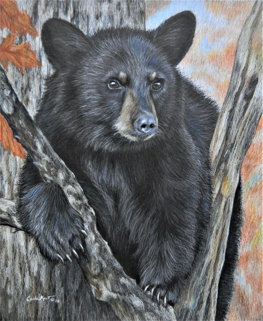 Backyard Visitor, Drawings / Sketch,Paintings, Photorealism,Realism, Animals,Nature,Wildlife, Painting,Pencil, By Carla Kurt