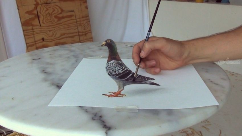 Bird in 3D: amazing!, Drawings / Sketch, Realism, 3-D, Oil, By Stefan Pabst