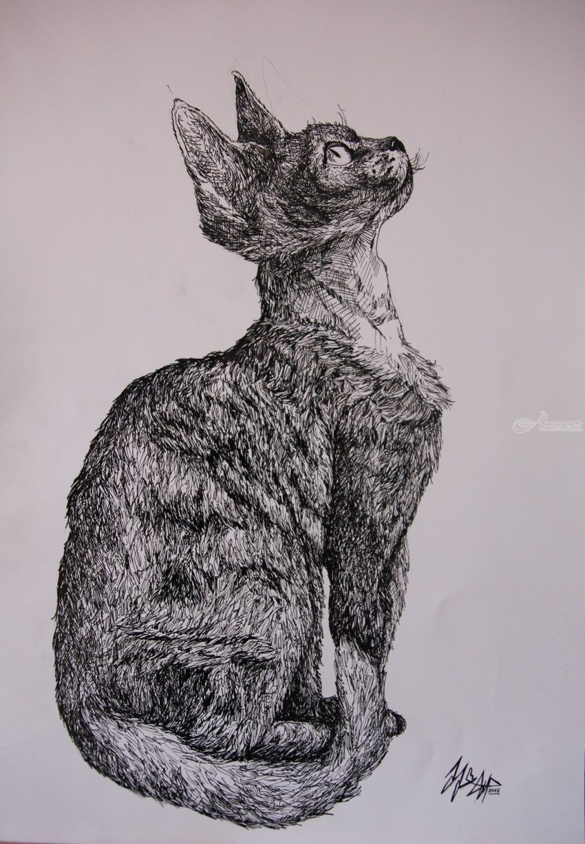 Devon Rex, Decorative Arts, Drawings / Sketch, Illustration, Commercial Design, Fine Art, Realism, Surrealism, Symbolism, Anatomy, Animals, Composition, Conceptual, Spiritual, Still Life, Ink, By Misia Slemp