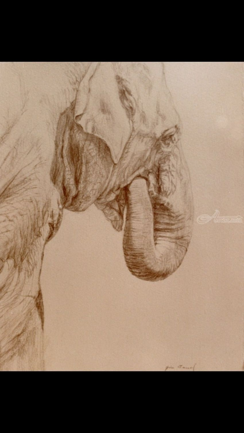 Elephant, Drawings / Sketch, Fine Art,Realism, Anatomy,Animals,Daily Life,Documentary,Figurative,Found Objects,Happenings,Humor,Inspirational,Moving Images,Narrative,Portrait,Spiritual,Wildlife,Window on the World, Pencil, By James Cassel