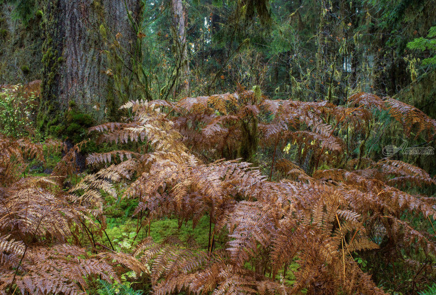 Ferns, Photography, Photorealism, Landscape, Photography: Premium Print, By Mike DeCesare