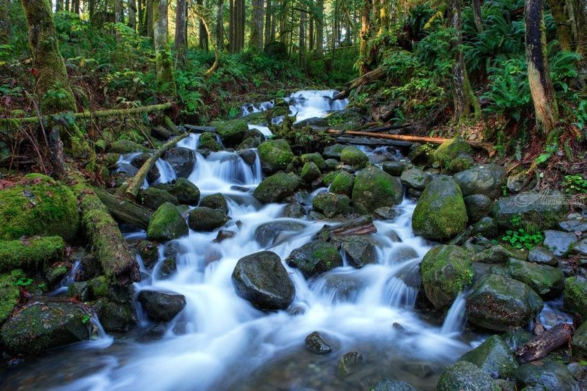 Forest Stream, Photography, Photorealism, Landscape, Photography: Premium Print, By Mike DeCesare