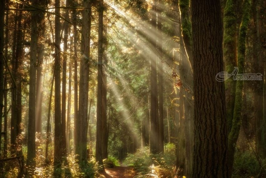 Forest Sunlight, Photography, Photorealism, Landscape, Photography: Photographic Print, By Mike DeCesare