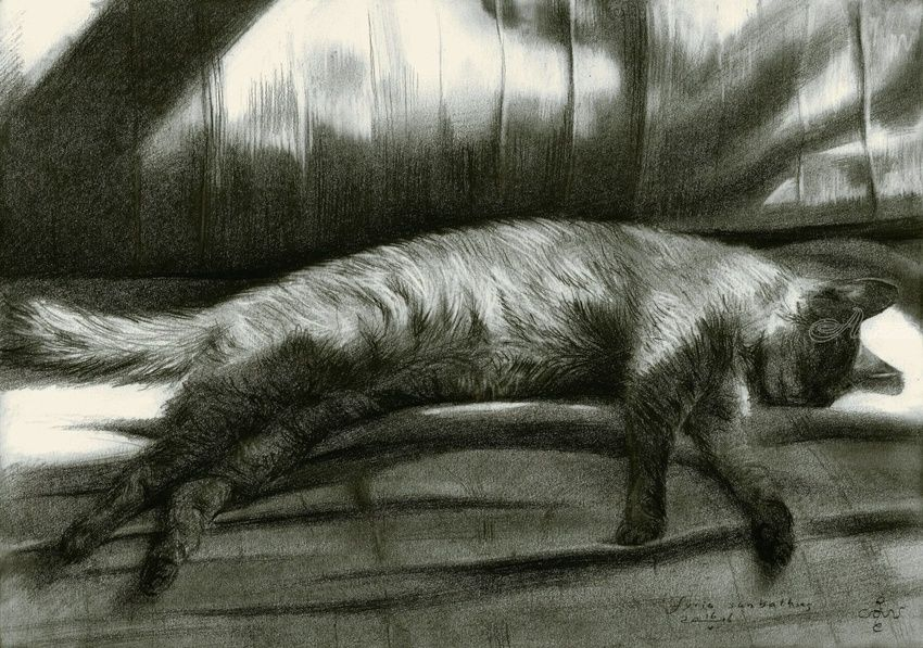 Furia sunbathing - 16-05-16 (sold), Drawings / Sketch, Impressionism, Photorealism, Realism, Animals, Composition, Figurative, Inspirational, Pencil, By Corne Akkers