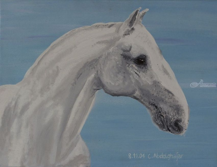 Lippizan horse with special nose, Paintings, Realism, Animals, Canvas, By Claudia Luethi alias Abdelghafar